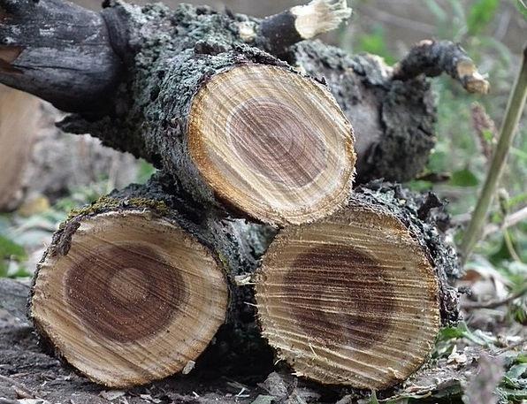 Куплю фруктовые дрова