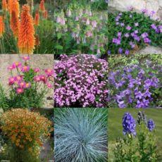 Многолетники багаторічники квіти рослини