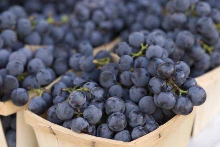 Продам виноград. Винные сорта. Изабелла и Буффало.