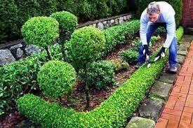 ... Інші послуги для тварин Луцьк. Фігурна стрижка рослин 9fb99d0db06a1