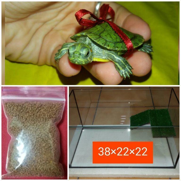 Комплек : маленькая красноухая черепашка 4-5см + террариум + корм .