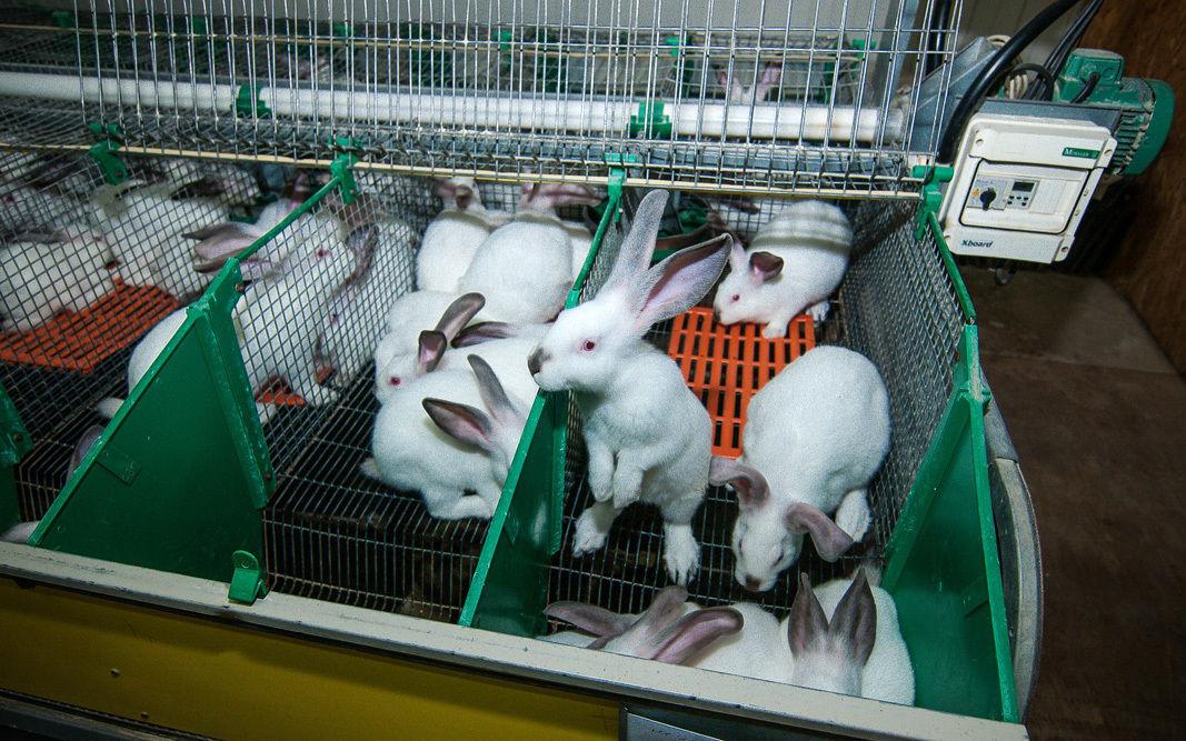 Продажа племенного хоз-ва «Кроликофф» с замкнутым циклом производства