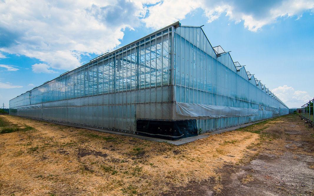 Продажа Действующего бизнеса по выращиванию овощей в теплицах.