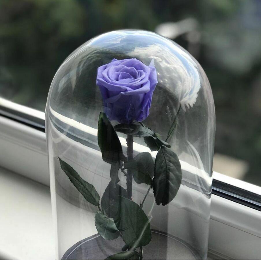 Роза в колбе недорого + коробка + гравировка