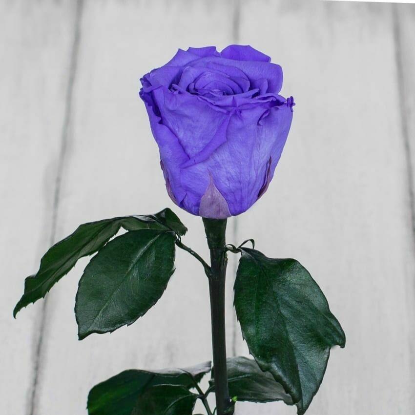 Стабилизированная роза в колбе Lerosh - Standart 33 см, Лиловая