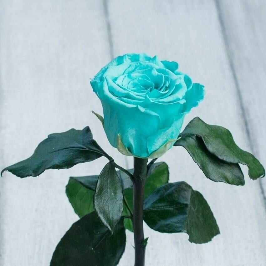 Невянущие розы в колбе Lerosh – Mini 27 см, Бирюзовая