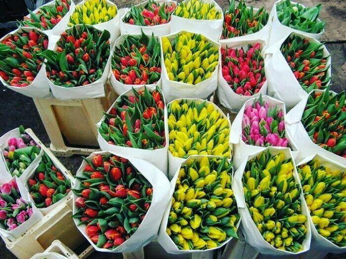Цветы, букеты, композиции в Днепре на 14 февраля. Оптовые цены.