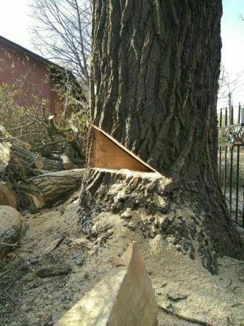 Зрізання ,обрізка,валка,спилювання дерев по Львову та області