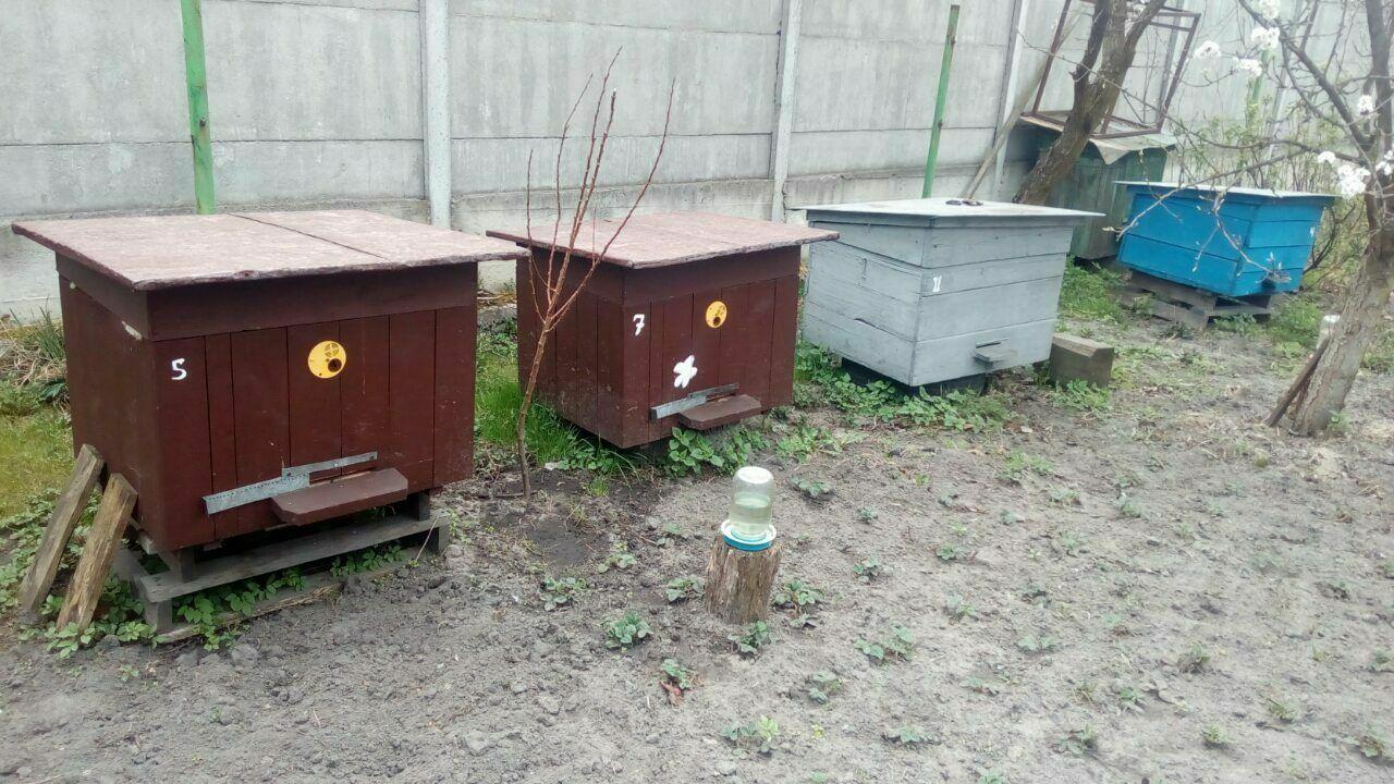 Бджоло сімї бокфаст, італійка, вулики із надставками.