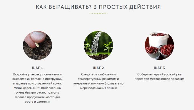 Гибридные мини деревья экодар  купить со скидкой 55% реальные отзывы 6