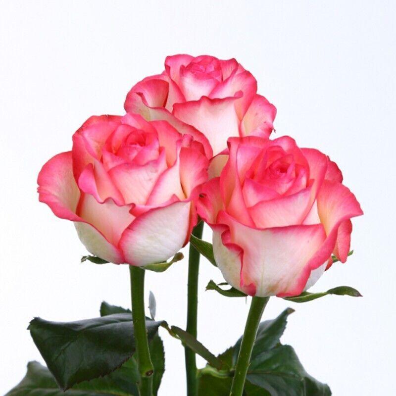 Цветы купить в мариуполе, букетов