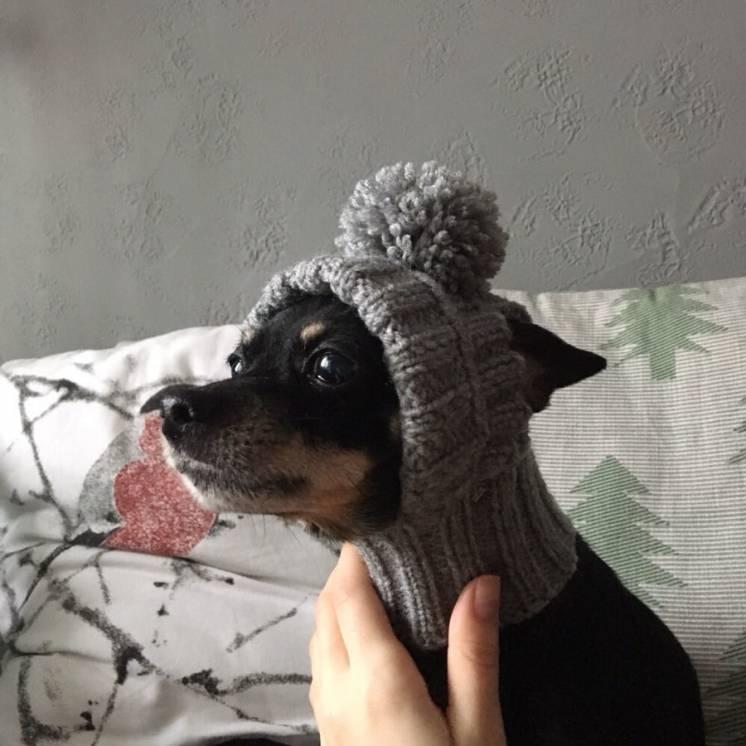 Шапочки для собак. Зимние шапки для собак  на заказ