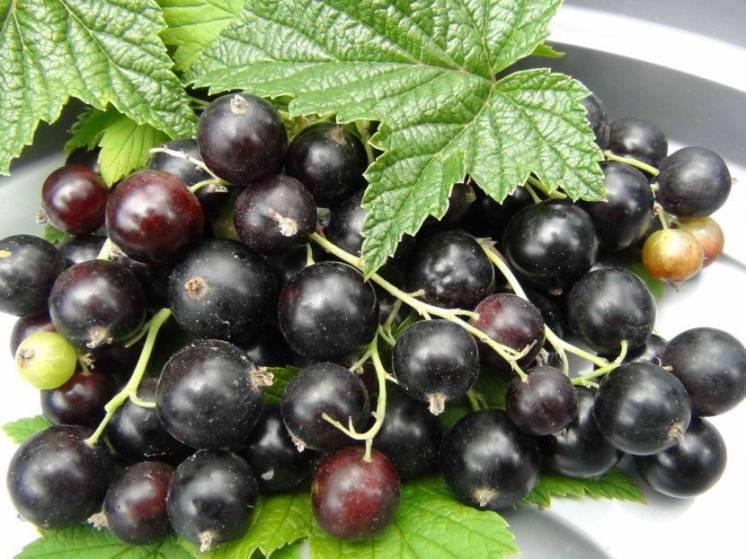 клетчатка пищевая растительная порошок чёрной смородины