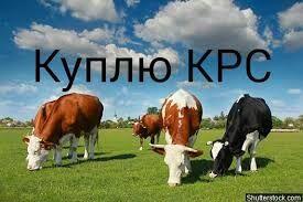 КРС ДОРОГО