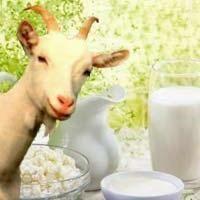 Продаеться козье молоко