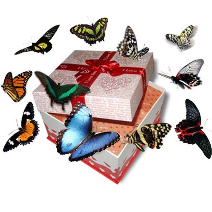 Салют живых бабочек на свадьбу!