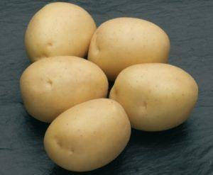 Картофель Нектар 1 репродукция сетка 3кг.