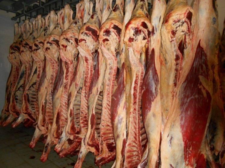 Продам яловичину/конину