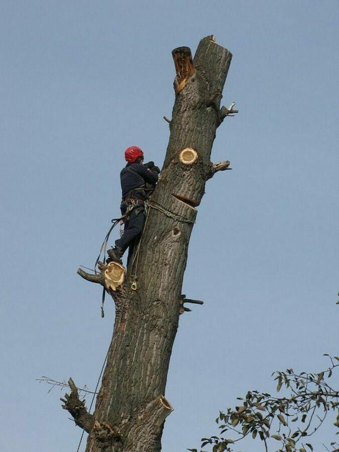 Зрізання дерев,корчування дерев Калуш