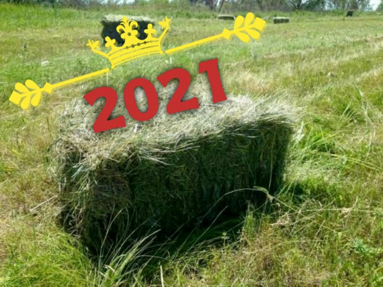 Продам сено (сіно) 2021г.в тюках Сено №1. В любом количестве.