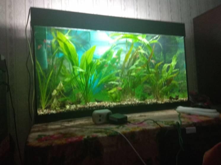 Продам аквариумы (3шт.) с полной комплектацией, разных рыбок