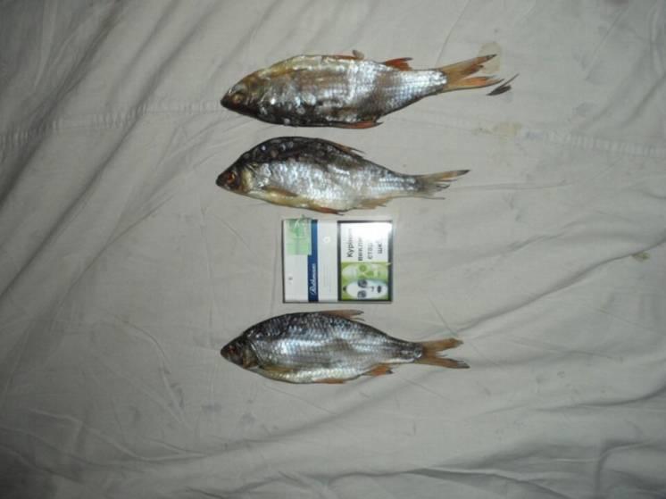 Рыба, Тарань, Плотва