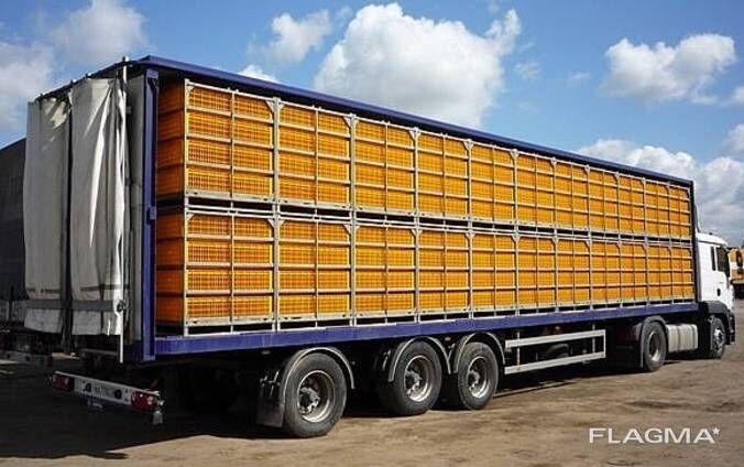 Аренда птицевоза, услуги по перевозке транспортировке живых кур