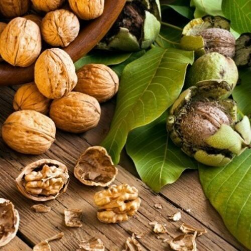 Привитые саженцы Грецкого ореха