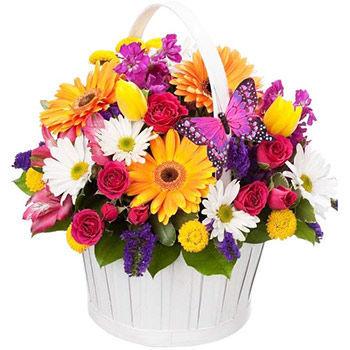 Квіти та подарунки в м.Рівне з доставкою