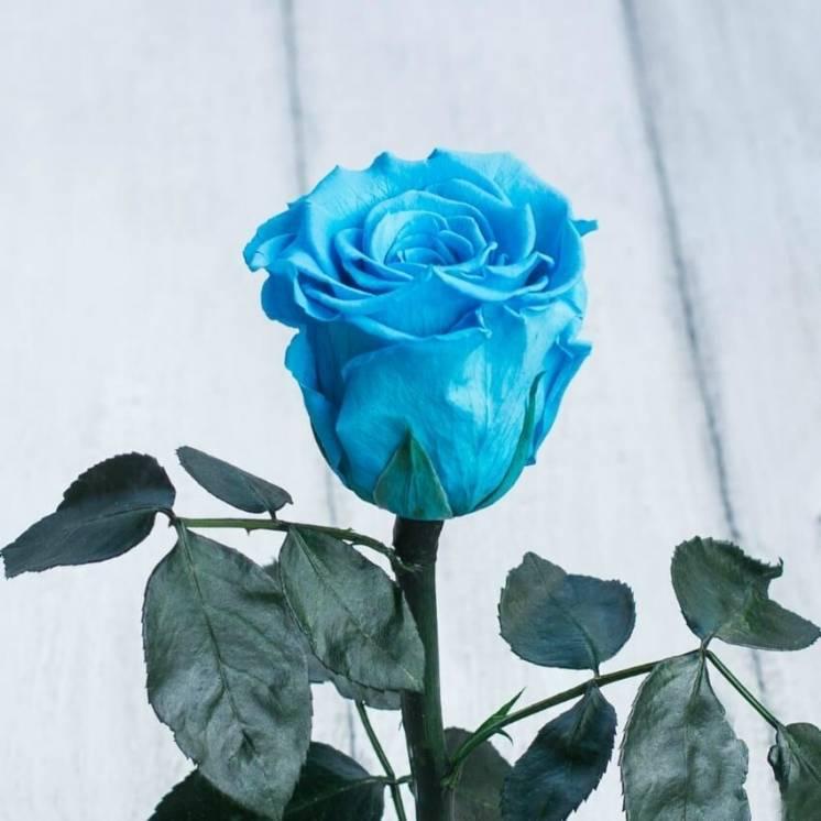 Стабилизированная роза в колбе Lerosh – Mini 27 см, Голубая