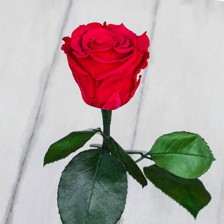 Стабилизированная роза в колбе Lerosh – Standart 33 см, Малиновая