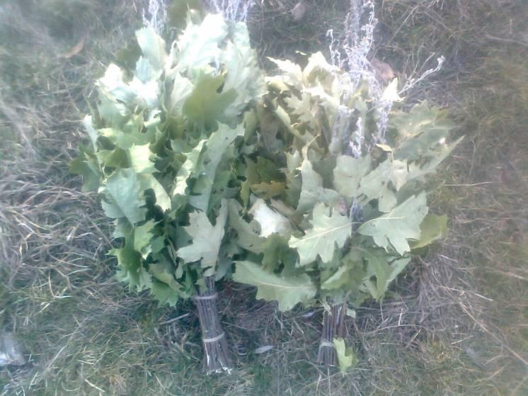 веники дубовые для бани сауны