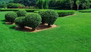 Газонная трава Лилипут Семена
