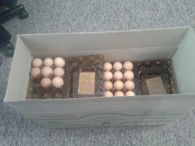 лотки для яиц яичные лотки