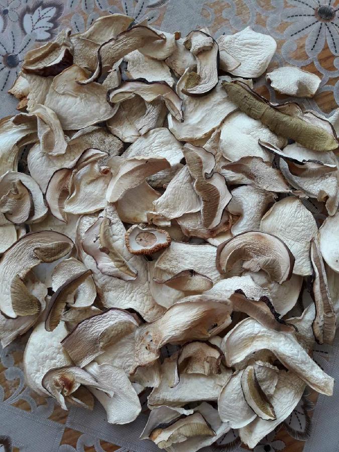 Білі гриби, белые грибы