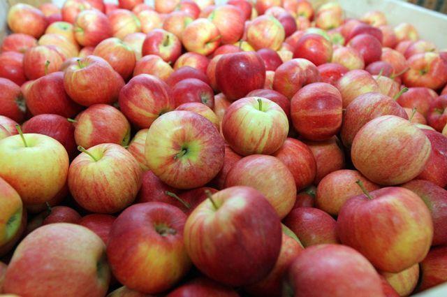 Куплю соковое яблоко