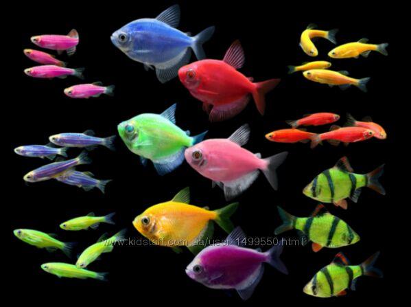 Продаю акваріумні рибки, молінезія чорна