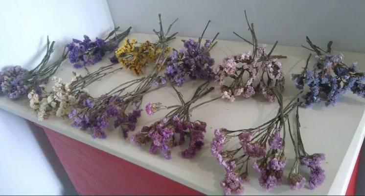 Натуральные сухоцветы для декора, букетов, творчества