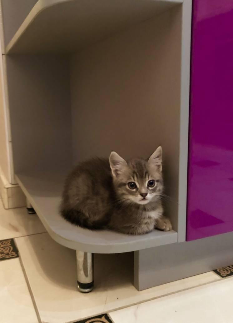 Котенятка безкоштовно