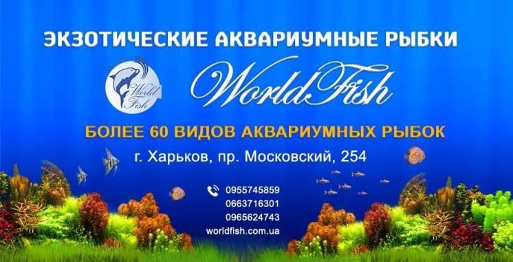 Экзотические аквариумные рыбки, более 70 видов, аквариумы, фильтра