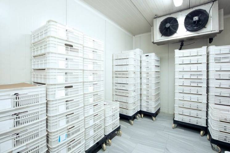 Холодильные камеры, шок заморозка мясо, курица, хранение, охлаждение