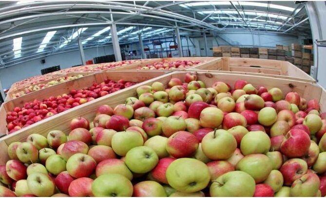 Зберігання та охолодження яблук, груш, сливи, камери охолодження