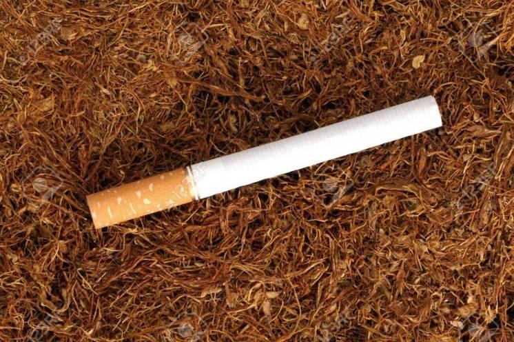 Тютюн з українського листа, хороші сорти і не дорого