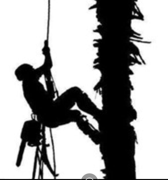Спил и обрезка деревьев Альпинистами . Арбористика