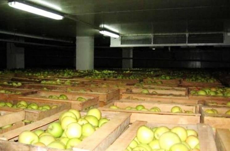 Хранение яблок, груш, фруктов холодильные установки, агрегаты, камеры
