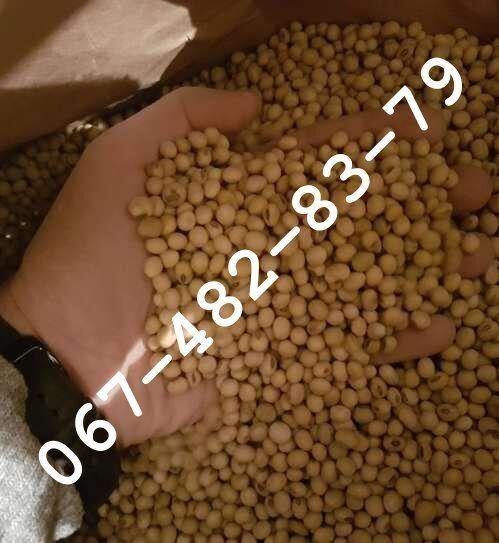 Продам семена сои COLBY канадский трансгенный сорт (элита)