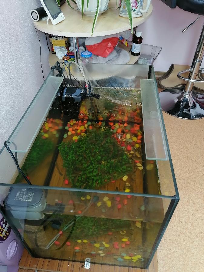 Готовый аквариумный комплекс для аквапилинга ног рыбкой Гарра Руфа
