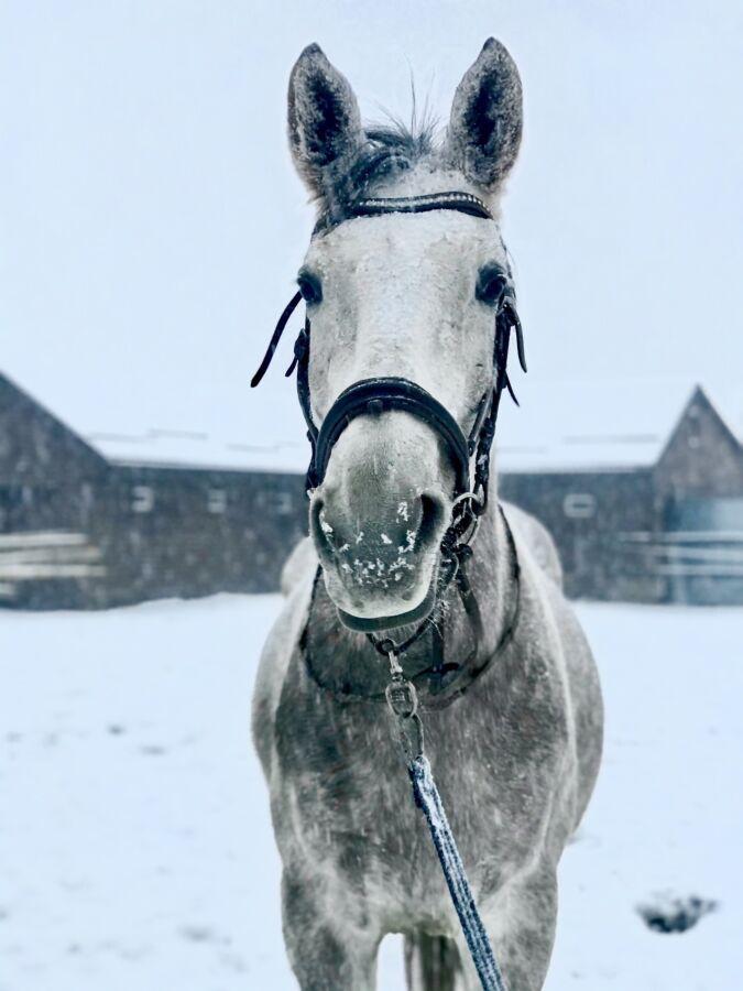 Фотосесії з конями