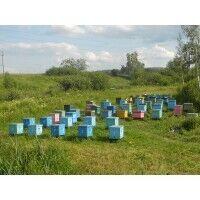 Продам бджоли, вулики, рамки.