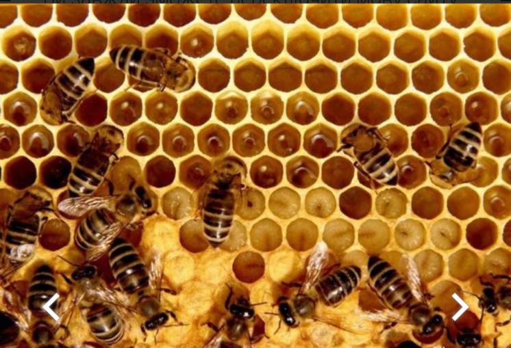 Пчелопакеты карпатка 4 рамки расплода